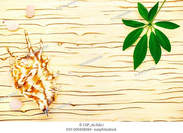 green leaf of shefler, shell and stones on wooden ice tree background