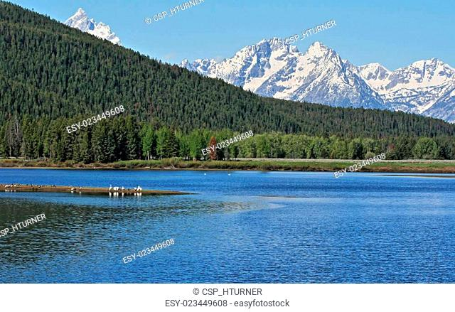 Ducks, Geese, and Swans in Jenny Lake in front of Mount Moran in the Grand Teton mountain range in the Grand Teton National Park in Wyoming USA during the...