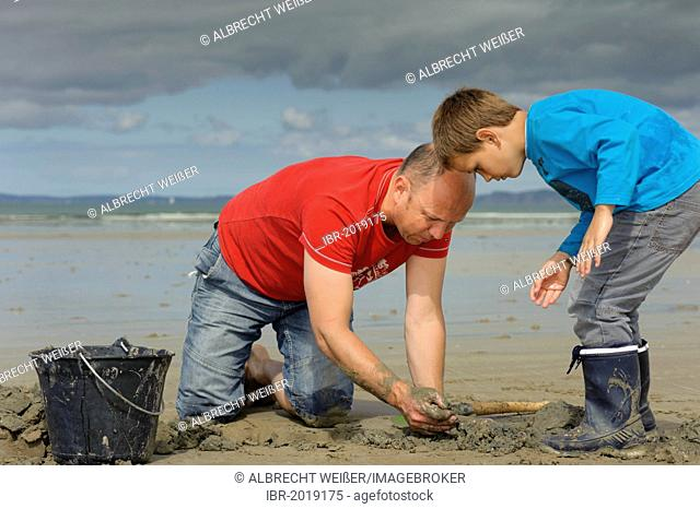 A young angler and an adult digging for sandworms (Arenicola marina) on the beach, Atlantic Ocean, Finistere, Brittany, France, Europe, PublicGround