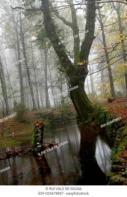 small river in the portuguese national park