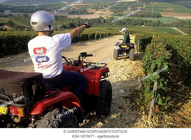 driving an ATV in the Champagne vineyard of the Cote des Bars, Aube department, Champagne-Ardenne region, France, Europe