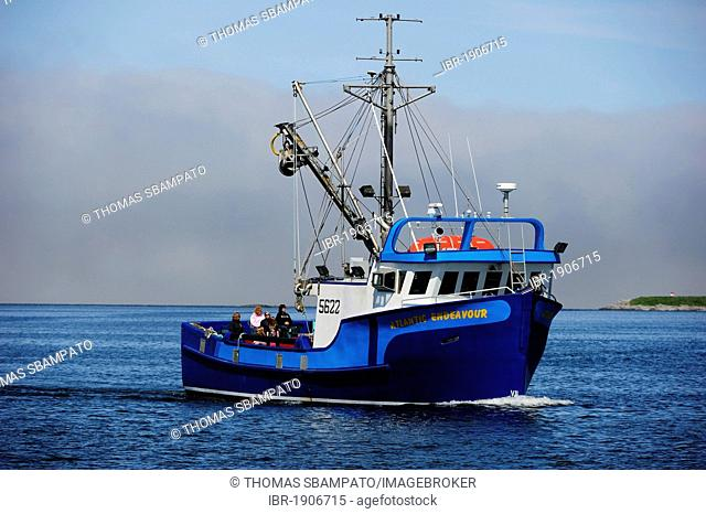 Fishing boat with tourists entering into the harbor, Newfoundland, Canada, North America