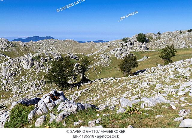 Monte Cervati, Landscape with rocks and beeches, Cilento National Park, UNESCO World Heritage site, Campania, Italy