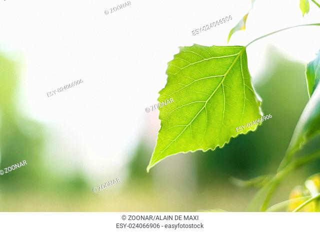 Tree leaf with space for text