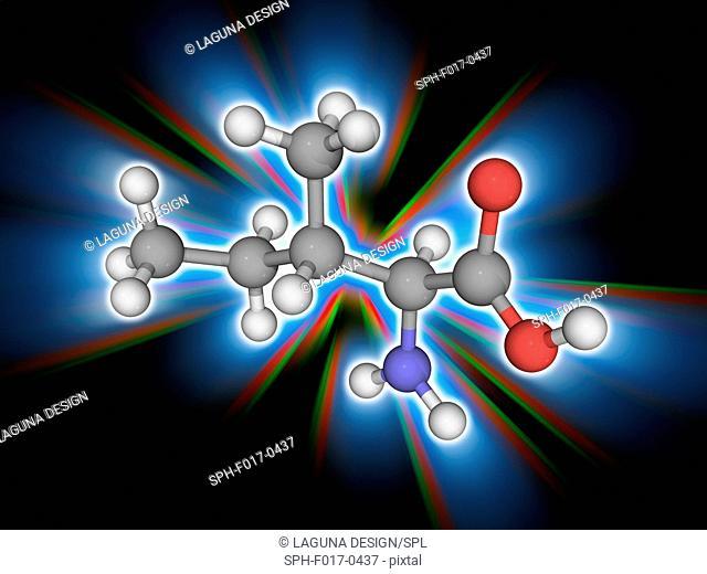 Isoleucine. Molecular model of the essential alpha-amino acid isoleucine (C6.H13.N.O2). This amino acid is found in eggs, soy protein, seaweed, turkey, chicken
