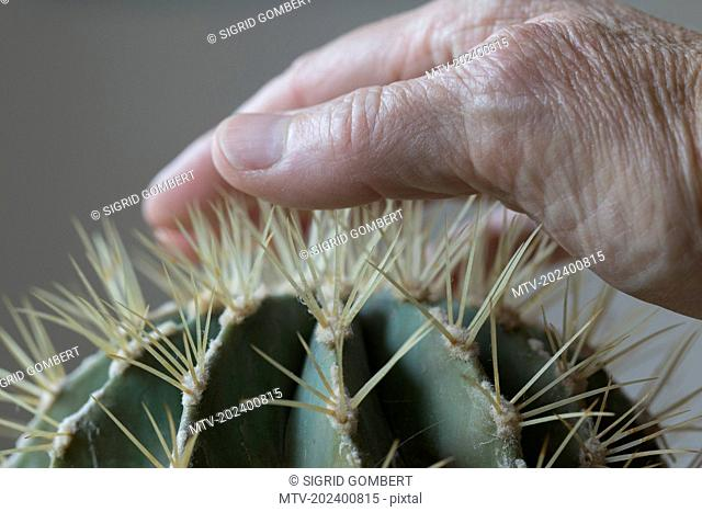Close-up of human hand touching cactus spike
