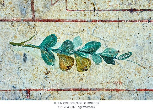 Roman Fresco of fruit bird from The Large Columbarium in Villa Doria Panphilj, Rome. A columbarium is usually a type of tomb with walls lined by niches that...