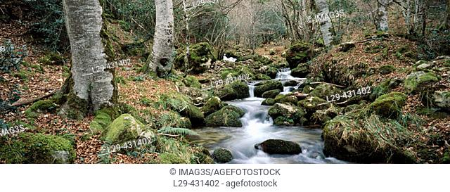 Alba River in Mount Llaimo. Redes Natural Park. Asturias. Spain