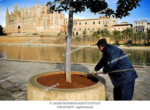 Gardener working, Palma de Mallorca, Balearic Islands, Spain
