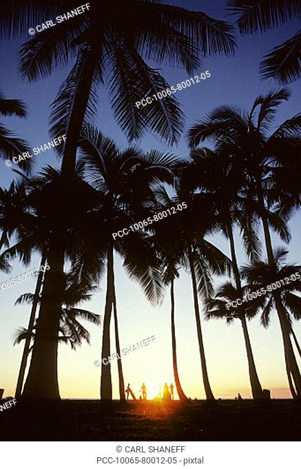 silhouette of people on the beach under palm trees at sunset