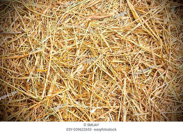 Close up rice straw background