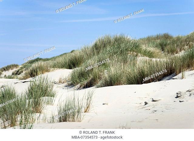 Germany, Lower Saxony, East Frisia, Juist, beach grass (Ammophila)