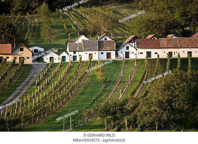 Kellergasse and vineyards on Galgenberg, close Wildendürnbach, Weinviertel, Lower Austria, Austria