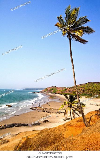 Palm trees on the beach, Vagator, Bardez Taluka, Goa, India