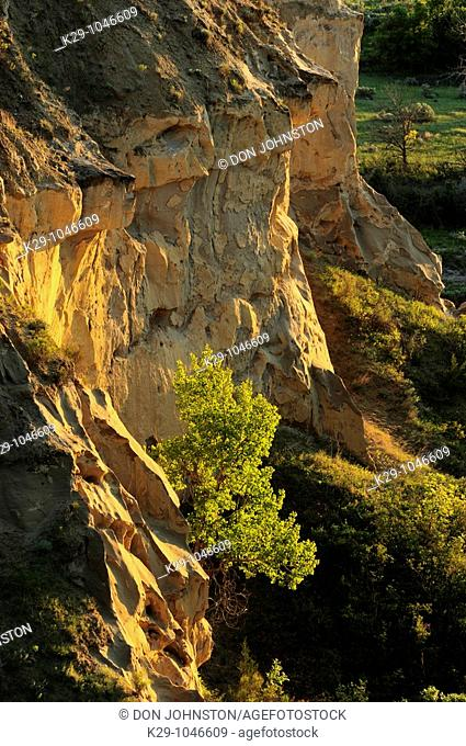 Eroded sandstones of Wind Canyon with cottonwood tree and spring foliage