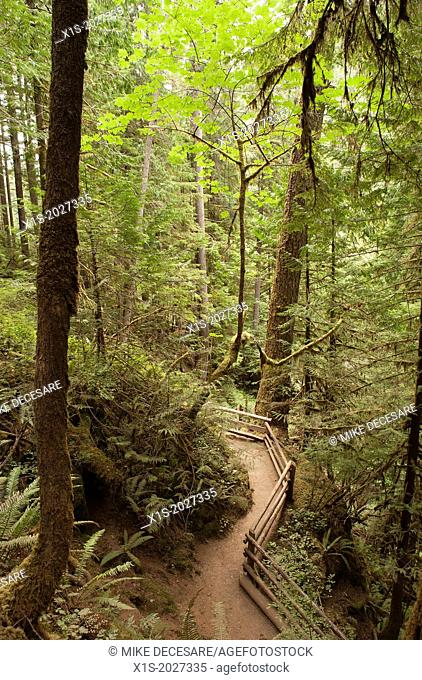 Trail in a mountain forest is outlined by a wooden fence line