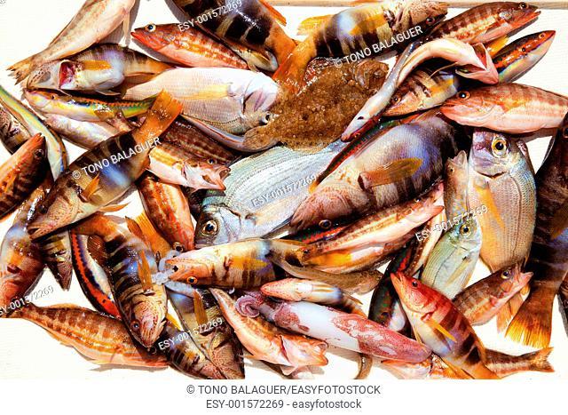 catch of fish in Mediterranean bream squid roack fishes
