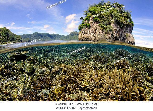 Hard Coral Reef, Acropora sp., Fagaalu Bay, Tutuila Island, Polynesia, American Samoa