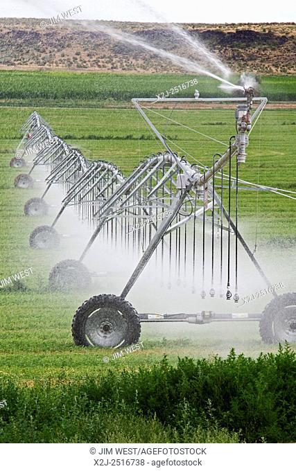 Raft River, Idaho - Irrigation using a center-pivot sprinkler system