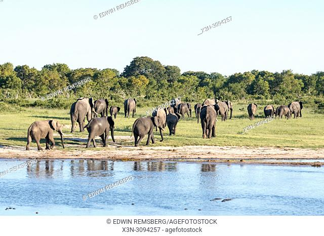 A family of elephants leaving a watering hole in Hwange National Park. Hwange, Zimbabwe