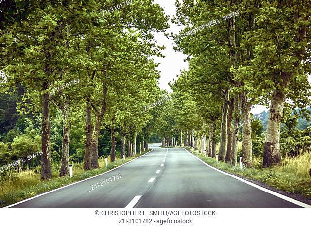 Tree lined road in Slovenia heading towards Croatia