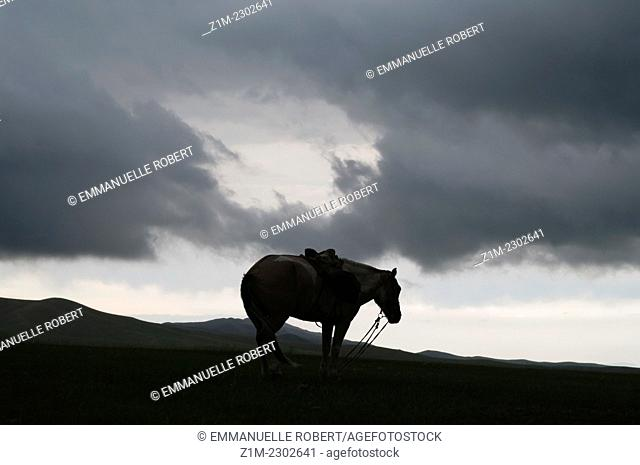 Horse in mongol steppe, Orkhon Valley, Mongolia, Asia
