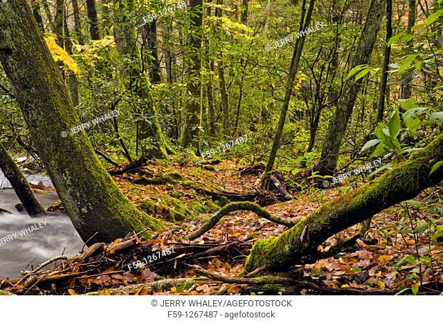 Oconaluftee area, Great Smoky Mtns National Park, NC