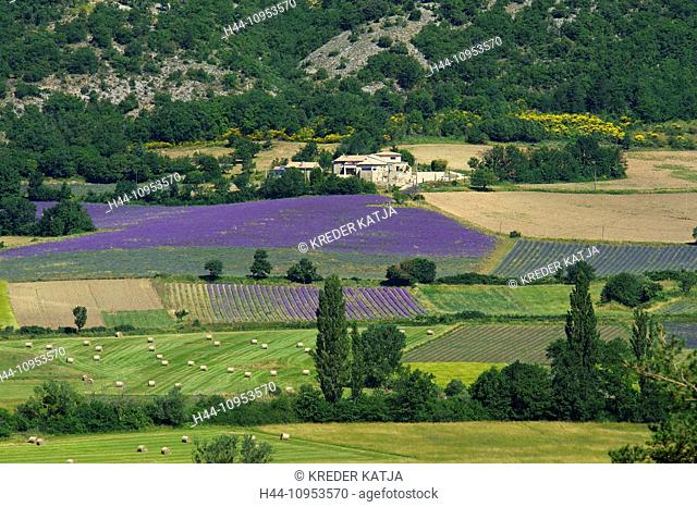 France, Europe, Provence, South of France, lavender, lavender blossom, lavender field, lavender fields, scenery, landscape, agriculture, agricultural