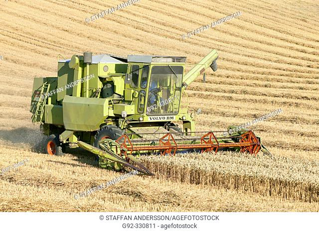 Harvester on field of wheat. Skåne. Sweden