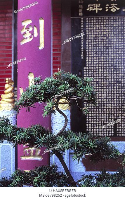 China, Hong Kong, New Territories,  Temple of 10 000 Buddhas, stroke, Detail, conifer, Asia, Eastern Asia, island state, island, city, metropolis, metropolis