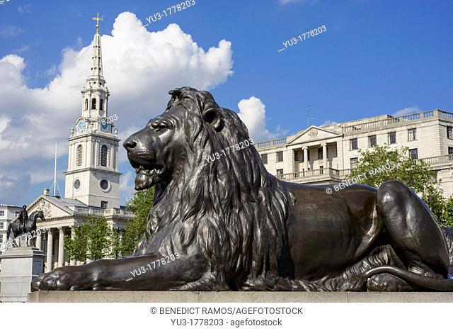 Trafalgar Square lion with St Martin-in-the-Field church in the background, London, England