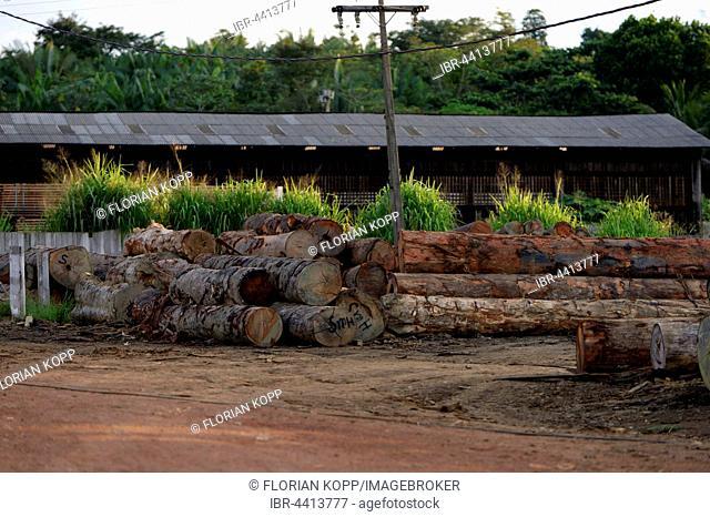 Sawmill, illegal logging, Amazon rainforest, Trairão, Trairão District, Pará, Brazil