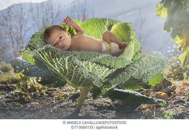 newborn baby in a cabbage