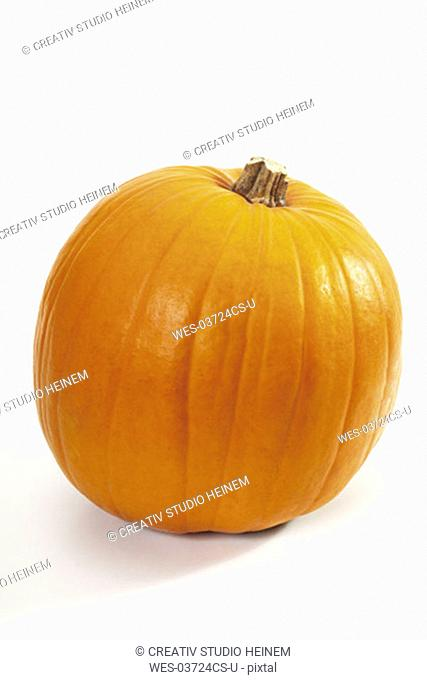 Pumpkin, Cucurbita