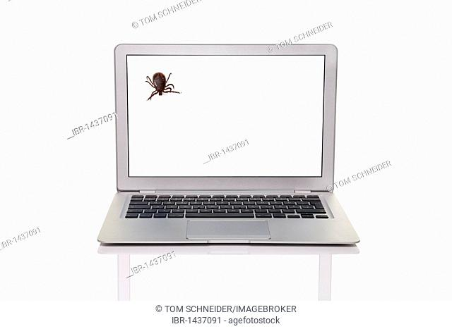 Laptop with a tick, symbolic for computer viruses