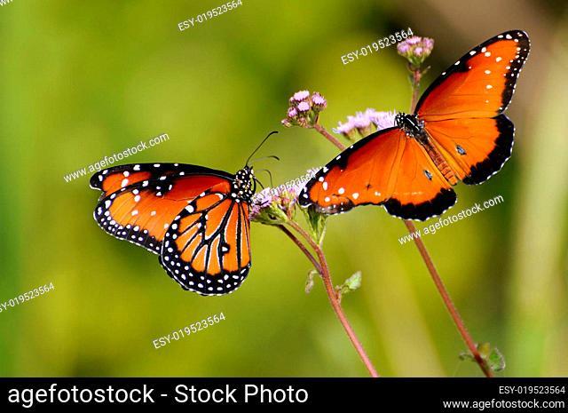 Monarchenpaar