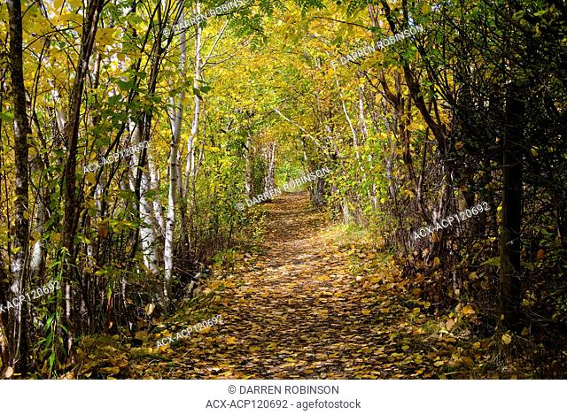 Raven Trail during autumn in Salmon Arm, in the Shuswap region of British Columbia, Canada
