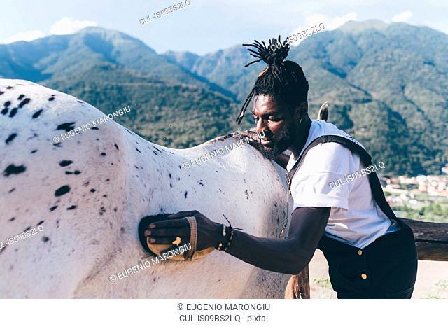 Cool young man grooming horse in rural equestrian arena, Primaluna, Trentino-Alto Adige, Italy