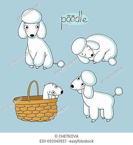 Set of cute poodle illustration in different poses. Portrait of a dog for decoration and design. Hand drawing isolated objects. Vector illustration