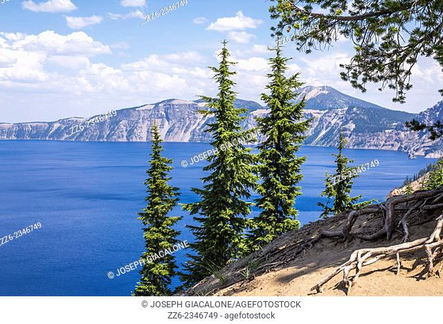 Pines trees above Crater Lake. Crater Lake National Park, Oregon, United States