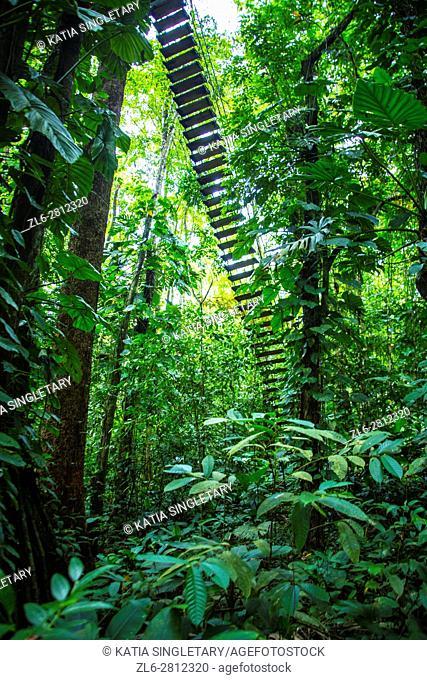 Jungle landscape. Isla Bastimentos, Bocas del toro, Panama