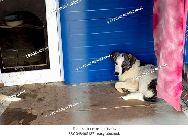 sick dog in the corner of the shelter cell, the theme of charity and mercy, animal shelter, dog rescue, volunteer work