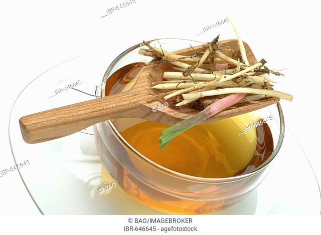 Tea made from Couch Grass (Elymus repens, Agropyron repens) roots, herbal tea, medicinal tea