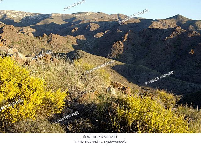 Spain, Cabo de Gata, nature reserve, Almeria, Las Negras, steppe, mountains, volcano, broom, morning