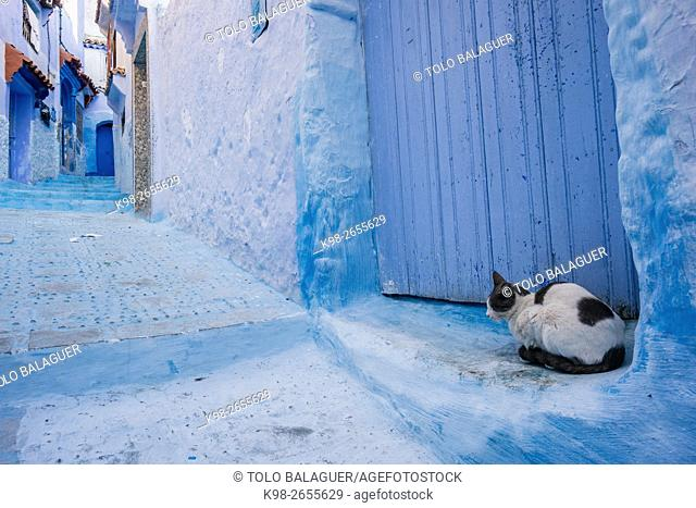 Morocco, Chefchaouen, Medina, Cat sitting in blue alley