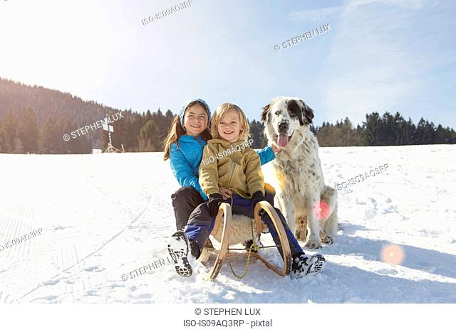 Brother and sister tobogganing with pet dog