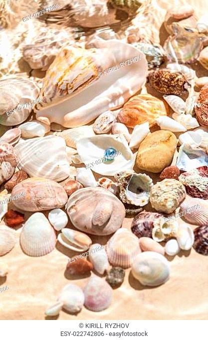 black pearl lying underwater on seashell
