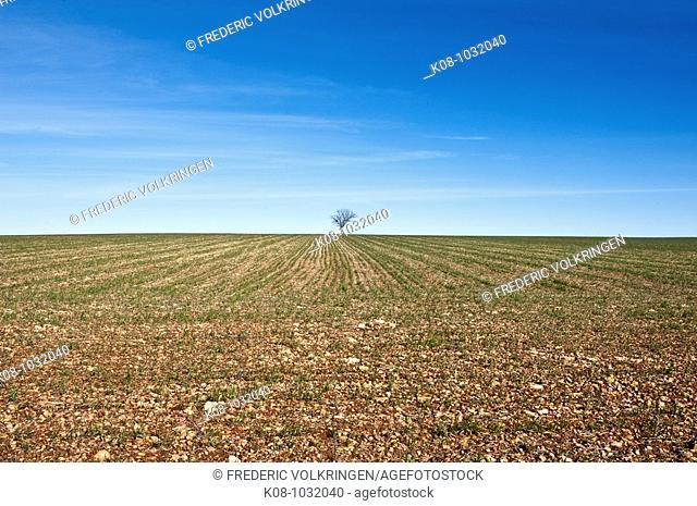 Farmlands, La Mancha, Spain