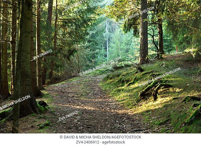 Landscape of a trail going throuh a forest in autumn