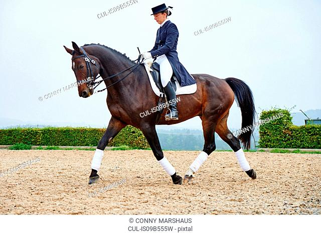 Female rider trotting while training dressage horse in equestrian arena
